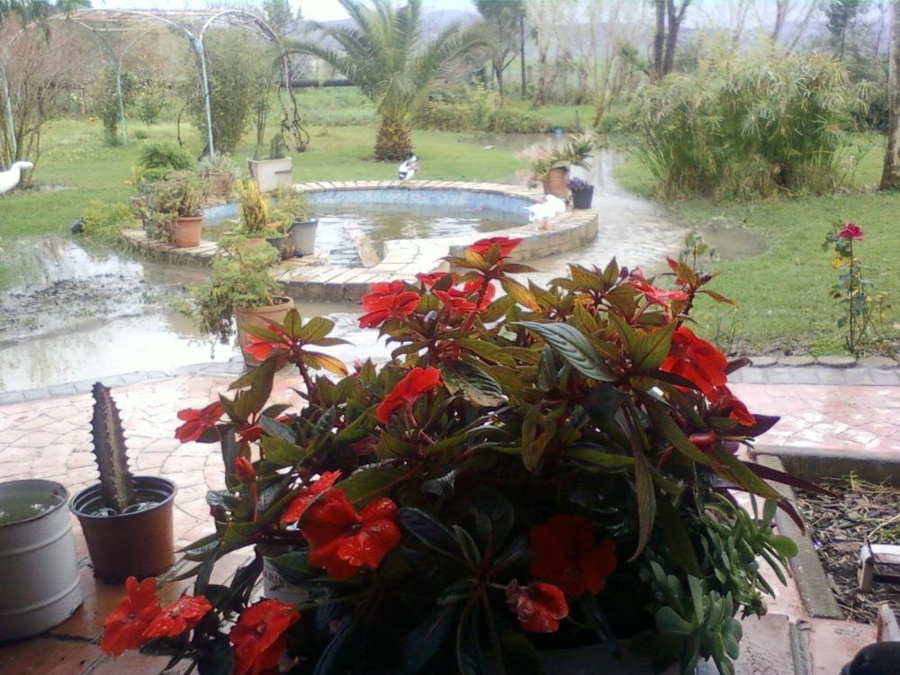 يوم ممطر في طنجة من حديقة المنزل